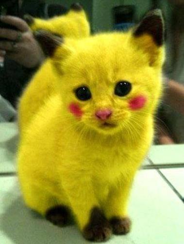 Alguem avisa pro anta do meu dono, que o pikachu tá mais pr rato do que pra gato